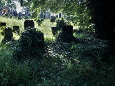 Židovský hřbitov Klatovy_5