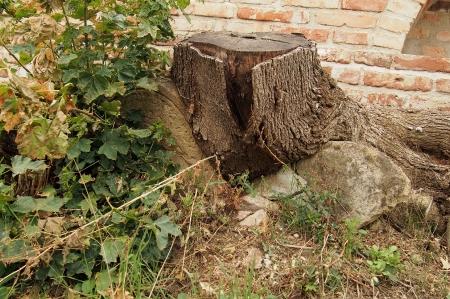 Židovský hřbitov Ivančice_23