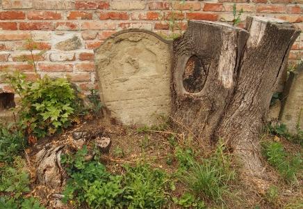 Židovský hřbitov Ivančice_26