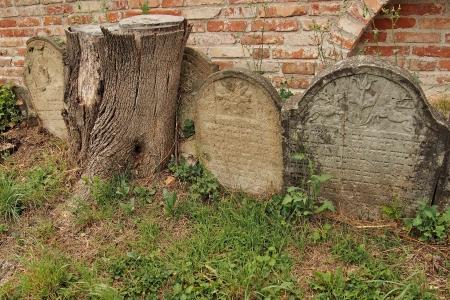Židovský hřbitov Ivančice_27