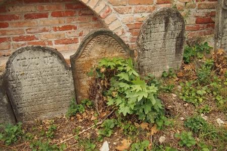 Židovský hřbitov Ivančice_28