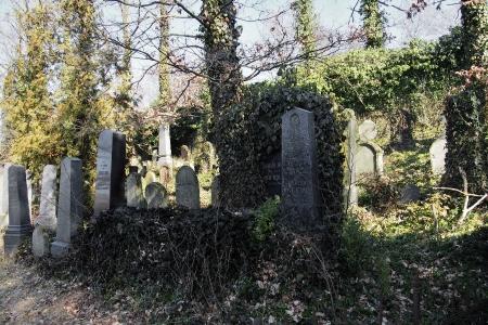 Židovský hřbitov v Kosově Hoře_63