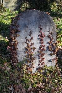 Židovský hřbitov v Kosově Hoře_82