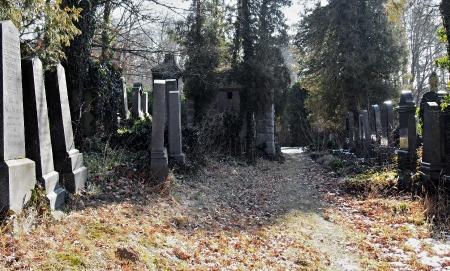 Židovský hřbitov v Kosově Hoře_84