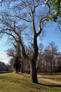 Zámek a park Veselí nad Moravou_29